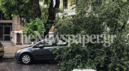 Βόλος: Έπεσε δέντρο από την κακοκαιρία – Ζημιές σε αυτοκίνητα [εικόνες]