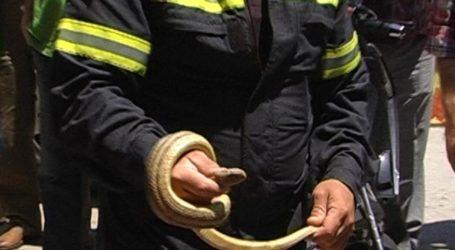 Βόλος: Πυροσβέστες απομάκρυναν φίδι από σκαλιά σπιτιού