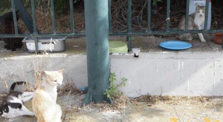 Αγωνία για τα εκατοντάδες ζώα στο πρ. αεροδρόμιο Ελληνικού ενόψει των έργων