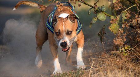 Σκύλος δάγκωσε 10χρονη στο πρόσωπο
