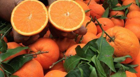 «Άλμα» στις εξαγωγές νωπών φρούτων και λαχανικών το πρώτο τρίμηνο του 2020