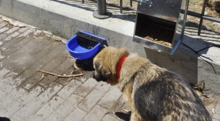 Eίχε τα σκυλιά του χωρίς φαγητό και δεμένα με αλυσίδες