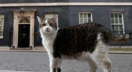 Ανάρρωσε η πρώτη γάτα που μολύνθηκε από τον κορωνοϊό στη Γαλλία