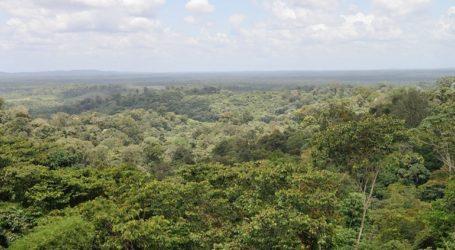 Η κλιματική αλλαγή κάνει ολοένα πιο χαμηλά και νεαρά τα δέντρα των δασών της Γης