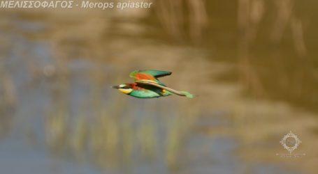 Αυτό είναι το πιο όμορφο πουλί της λίμνης Κάρλας – Δείτε εντυπωσιακές εικόνες