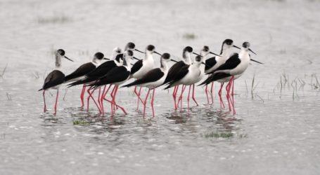 Οι «ζογκλέρ» της λίμνης Κάρλας – Δείτε εικόνες απίστευτης ομορφιάς