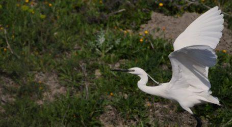Νέες αφίξεις στην Κάρλα – Γέμισε με εντυπωσιακά και σπάνια πτηνά η λίμνη [εικόνες]
