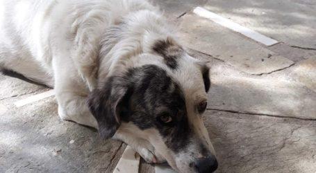 Απίστευτη περιπέτεια Βολιώτη: Άφησε τον σκύλο του στον κτηνίατρο κι εκείνος τον έχασε!