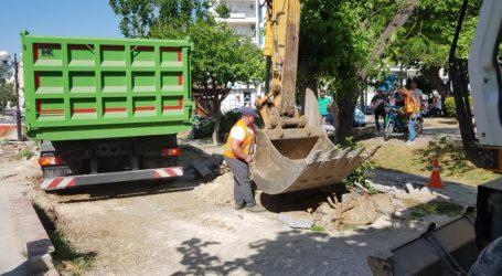 Μεταφύτευσαν δέντρο από την οδό Καραμπατζάκη – Δείτε βίντεο