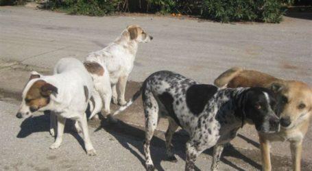 Δήμος Ελασσόνας: «Μαζικοί εμβολιασμοί αδέσποτων ζώων το Σαββατοκύριακο στην πόλη της Ελασσόνας»