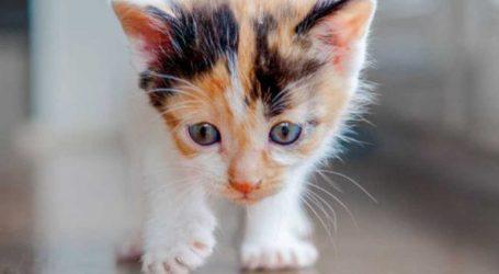 Βόλος: Γατάκι τρύπωσε σε θερμοθάλαμο τυροπιτάδικου – Το απεγκλώβισαν πυροσβέστες