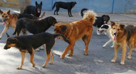 Αγέλη σκύλων επιτέθηκε σε Λαρισαίο – Νοσηλεύεται στο νοσοκομείο με σπασμένα πλευρά