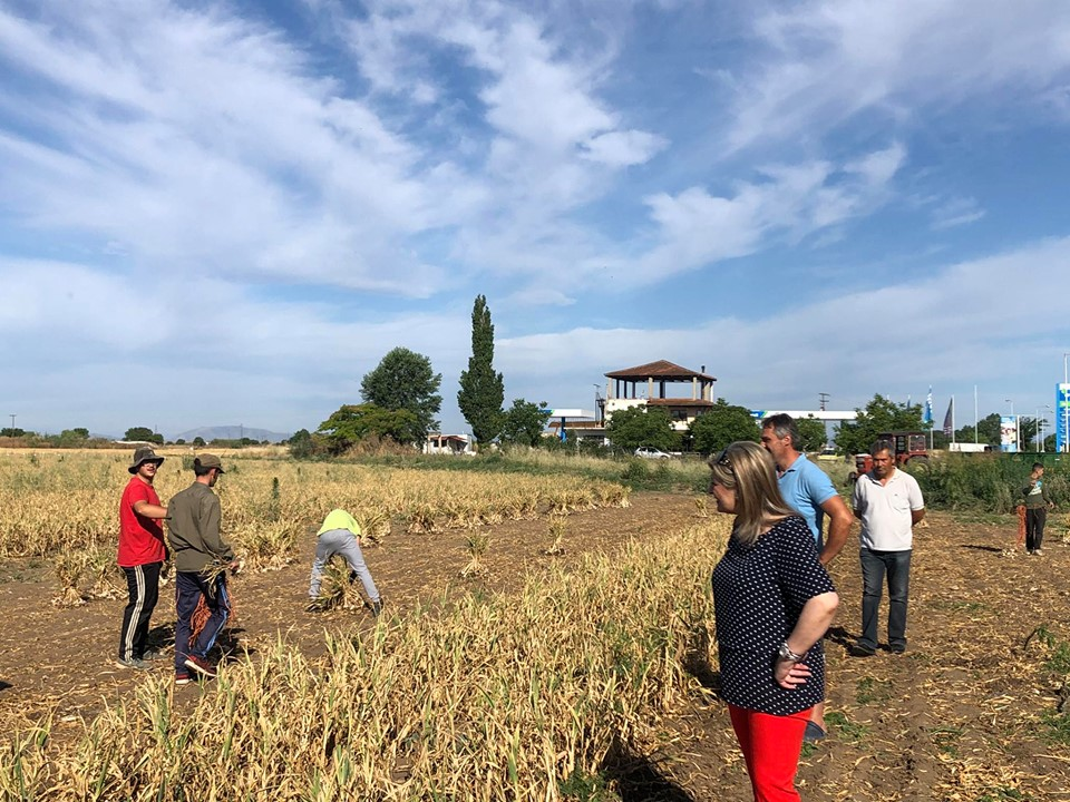 Λιακούλη: «Τα σκόρδα Πλατυκάμπου πρέπει να στηριχθούν από το υπουργείο»