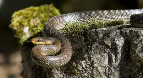 Τα 14 φίδια που θα συναντήσετε στο Πήλιο – Ποια είναι επικίνδυνα [εικόνες]