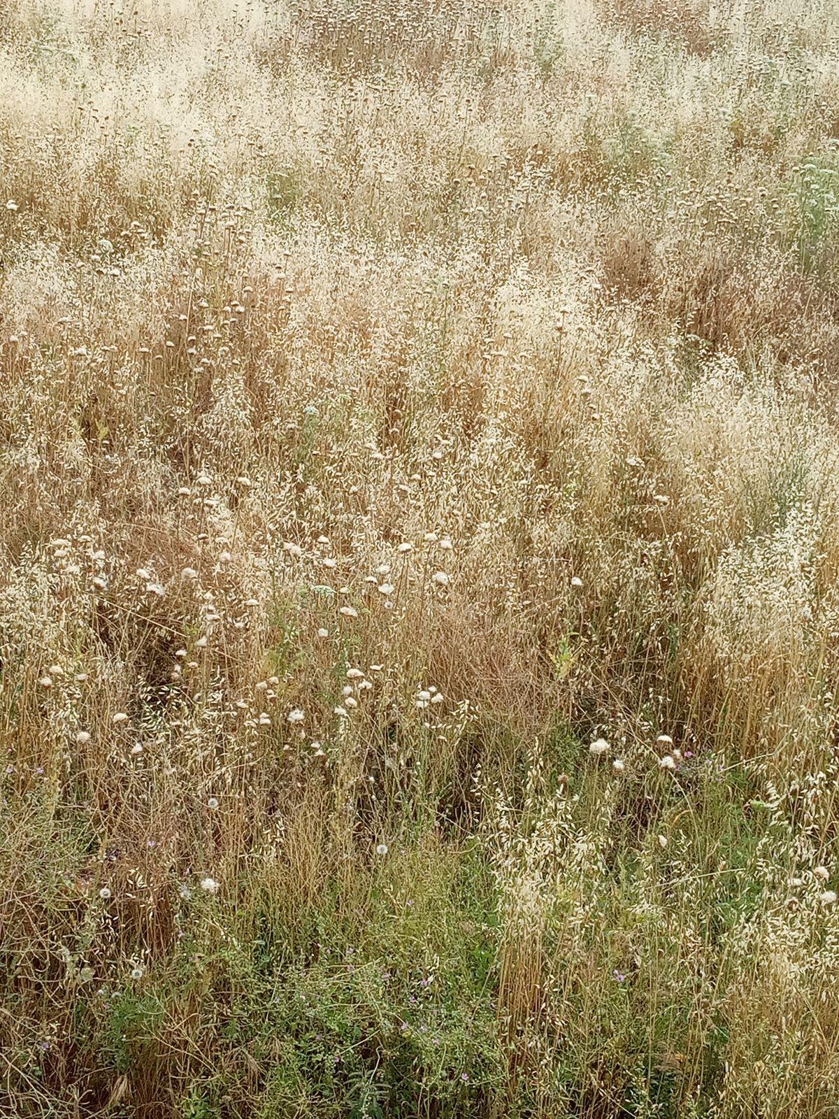 Θεόρατα ξερά χόρτα στη Λάρισα αποτελούν διπλό κίνδυνο (φωτο)