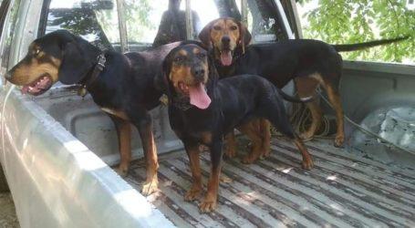 Έκλεψαν τρία σκυλιά στις Σταγιάτες