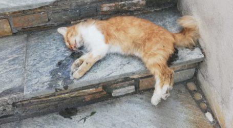 Φρίκη! Μοίρασαν… φόλες στον Αη Γιάννη Πηλίου και σκότωσαν γάτες