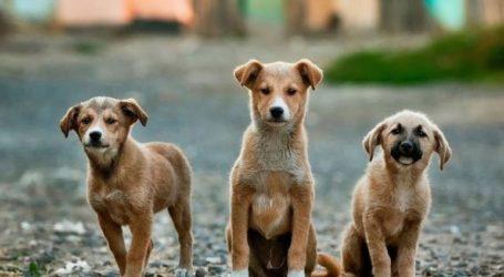 Με ένα… κλικ μέσω διαδικτύου οι υιοθεσίες αδέσποτων ζώων στον Δήμο Νάουσας