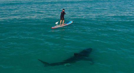 Σέρφερ στην Αυστραλία σκοτώθηκε από επίθεση καρχαρία