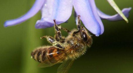 Η ΜΚΟ Friends of the Earth Europe καταγγέλλει τη χρήση των εντομοκτόνων