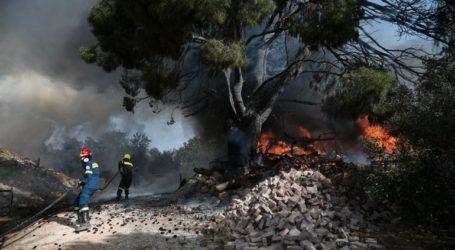 Πυρκαγιά σε εξέλιξη στη Χαλκιδική