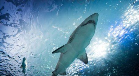 Δύτες προσπαθούν να απελευθερώσουν φαλαινοκαρχαρία που έχει παγιδευτεί