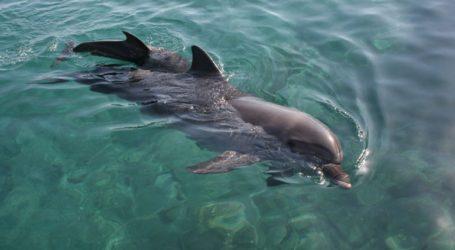 Αριθμός ρεκόρ νεκρών δελφινιών ξεβράζεται στις ακτές της Γαλλίας