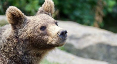 Αρκουδάκι εντοπίστηκε σε προχωρημένη σήψη κοντά στο γήπεδο της πόλης