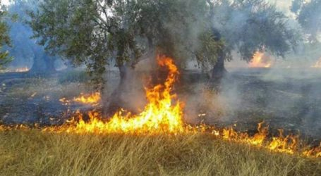 Φωτιά στον Αλμυρό έκαψε 170 ελαιόδεντρα