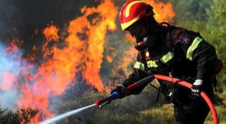 Κάηκε ολοσχερώς το ποιμνιοστάσιο στον Αμπελώνα – Πάνω από 100 ζώα βρήκαν φρικτό θάνατο στην πυρκαγιά
