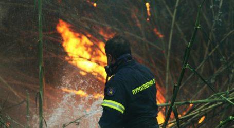 Aλμυρός: Φωτιά σε ελαιοπερίβολο