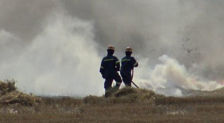 Λάρισα: Ξέσπασε πυρκαγιά κοντά στην Περιφερειακή Τρικάλων – Στο σημείο η Πυροσβεστική (φωτο)