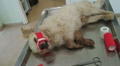 Σοκάρει κακοποίηση αδέσποτου σκύλου στη Λάρισα