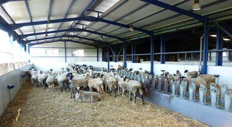 Μαγνησία: Παράταση προθεσμίας υποβολής αιτήσεων για άδειες κτηνοτροφικής εγκατάστασης και άδειες διατήρησης
