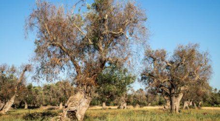 Ενημέρωση για τον οργανισμό καραντίνας Xylella fastidiosa