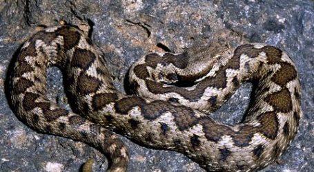 Μαγνησία: Πήγε να πλύνει τα ρούχα στο πλυντήριο και βρήκε φίδι!