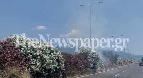 ΤΩΡΑ: Φωτιά στη διαχωριστική νησίδα στην είσοδο του Βόλου [εικόνες]