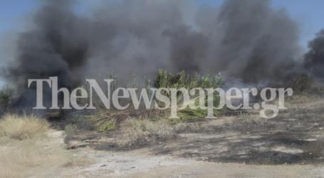 ΤΩΡΑ: Μεγάλη φωτιά στη Νεάπολη Βόλου – Δείτε εικόνες και βίντεο