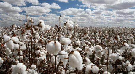 1ο Δελτίο Γεωργικών ΠροειδοποιήσεωνΟλοκληρωμένης Φυτοπροστασίας στη Βαμβακοκαλλιέργεια της ΠΕ Λάρισας