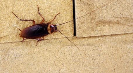 Γέμισε κατσαρίδες ο Βόλος – Συνεχίζει τους ψεκασμούς η ΔΕΥΑΜΒ