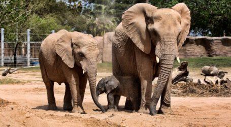 Περισσότεροι από 300 ελέφαντες πέθαναν στη διάρκεια δύο μηνών