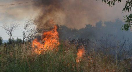 Υπό μερικό έλεγχο η πυρκαγιά στην Κάρυστο Ευβοίας