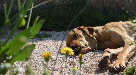 Ογδόντα δύο έλεγχοι της αστυνομίας σε ιδιοκτήτες ζώων συντροφιάς