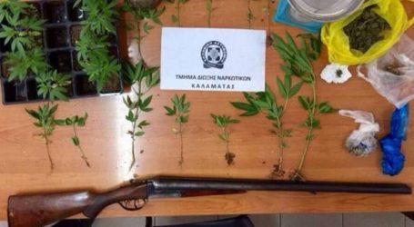 Εξαρθρώθηκαν εγκληματικές οργανώσεις που καλλιεργούσαν και διακινούσαν ναρκωτικά
