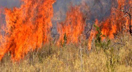 47 πυρκαγιές το τελευταίο 24ωρο σε όλη την Ελλάδα