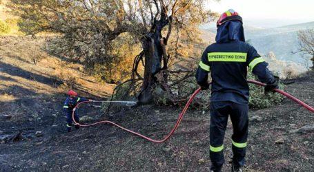 Υπό μερικό έλεγχο η φωτιά στην περιοχή της Φιγαλείας, στη νότια Ηλεία