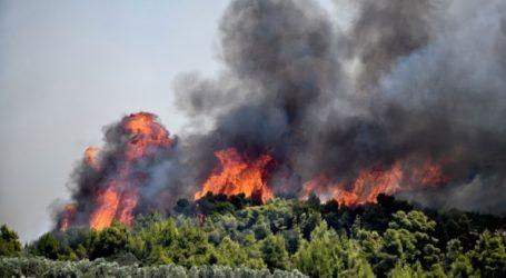 Πυρκαγιά σε δασική έκταση στο Πόρτο Γερμενό