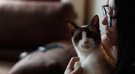 Γάτος βρέθηκε θετικός στον κορωνοϊό