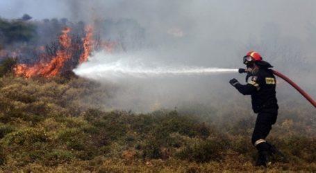 Πυρκαγιά σε περιοχή με χαμηλή βλάστηση στη Φυλή Αττικής