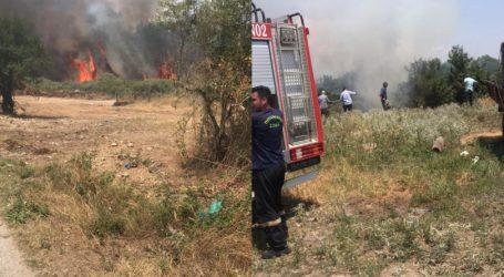 Ευχαριστήριο του Δημάρχου Ελασσόνας για την κατάσβεση της πυρκαγιάς στη Συκέα Ελασσόνας